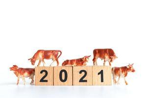 liten oxe och träklossar med siffror 2021 isolerad på en vit bakgrund, en symbol för år 2021 foto