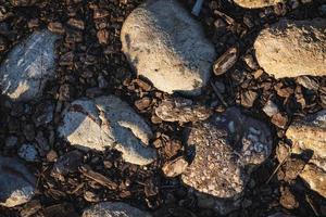 stenar och korkbark foto