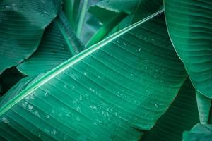 närbild av bananblad med vattendroppar