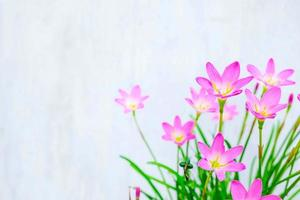 rosa och lila blommor bredvid en blå vägg