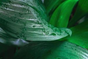 detalj av gröna blad