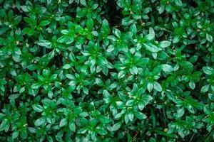 gröna blad i buskar
