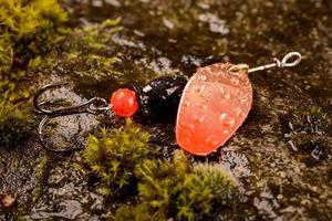 fiskesked lock på våt sten med mossa