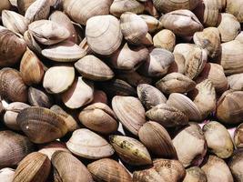 hög med musslor