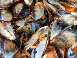 hög med musslor eller musslor
