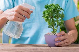 vattensprutan av växter i krukor foto
