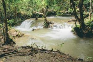 vattenfall under regnperioden och trädet foto