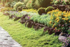 blommor i trädgården med solljus