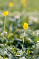 selektiv fokus för en gul petaled blomma