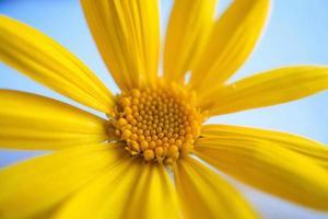 en vacker gul blomma under vårsäsongen foto