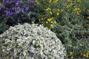 trädgård med blommor foto