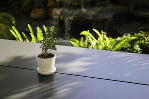 växt på ett kafébord