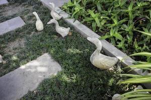 betong anka trädgård ornament