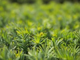 närbild av små gröna växter eller buskar foto