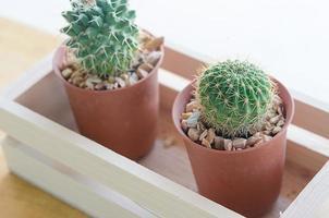 kaktusar i krukor foto
