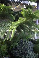 grön vintergrön gren foto