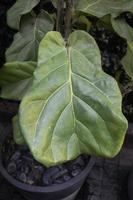 närbild av ett växtblad foto