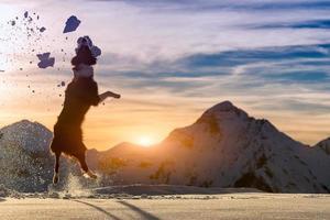 border collie hoppar i snön foto