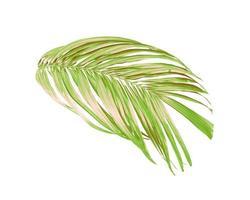 gröna blad av en palmträd isolerad på en vit bakgrund foto