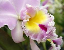 närbild av orkidéblommor foto