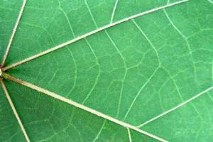 närbild av blad textur bakgrund