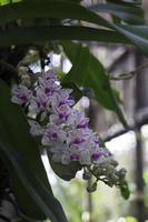färgglad orkidéväxt foto