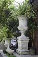 tropiska trädgårdsväxter i planteringar