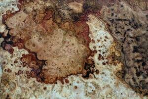 naturlig burl trä textur bakgrund
