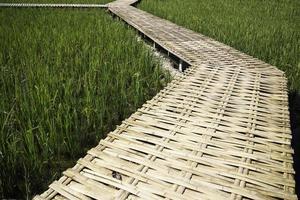 gångväg i ett risfält foto
