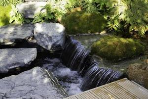 ström av vatten med gröna växter