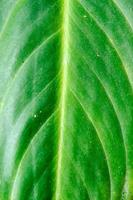 grönt blad konsistens