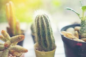 sortiment av kaktusar foto