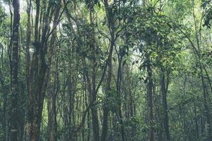 tropiska träd i en skog