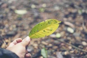 grönt blad i en hand