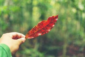 rött blad i en hand