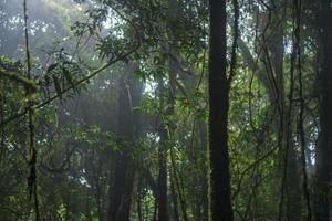 frodiga träd i en skog