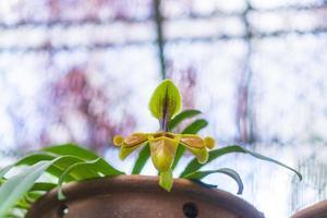 närbild av en orkidé foto