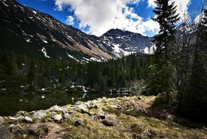 vårens ankomst i de höga bergen foto