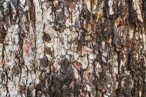 konsistens av barken av ett gammalt tall foto