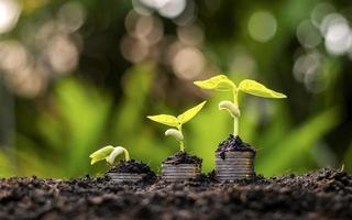 växter som växer på en hög med mynt för finans och bank foto