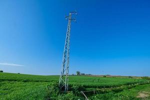 telefonstolpe i lantligt grönt fält foto