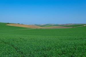 lantligt grönt sådd fält med blå himmel foto