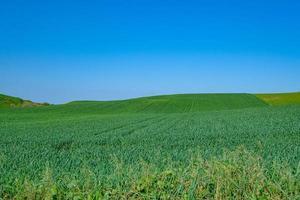 grönt sådd fält med blå himmel foto