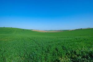 grönt fält med blå himmel foto