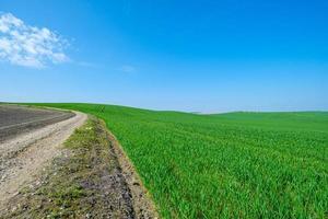 grusväg och gräsbevuxna gröna fält foto