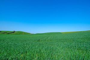 gräsbevuxna gröna fält foto
