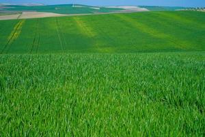 gräsbevuxna gröna lantliga fält foto