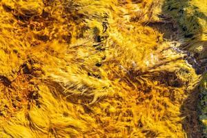 gul alger abstrakt bakgrund foto