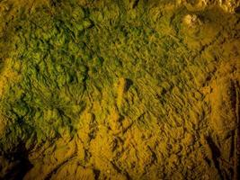 alger i flodvattnet foto