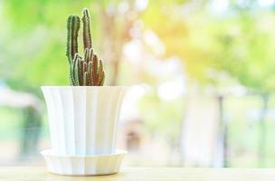 kaktus i en vit kruka foto